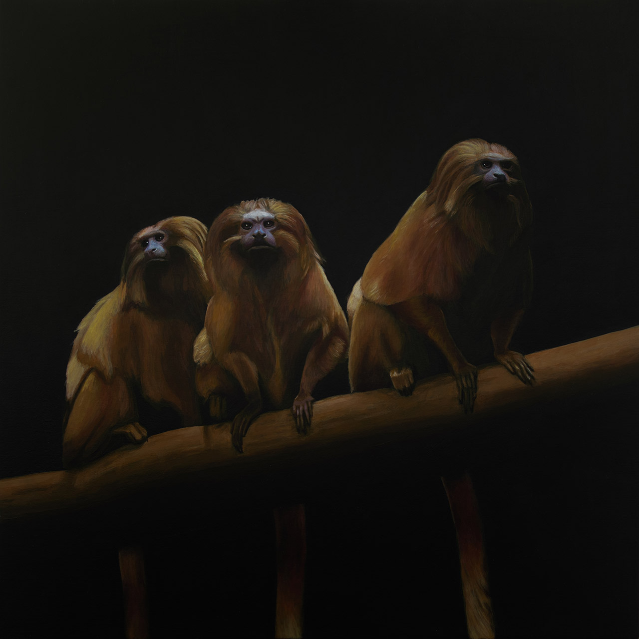 Three Wise Tamarins.jpg