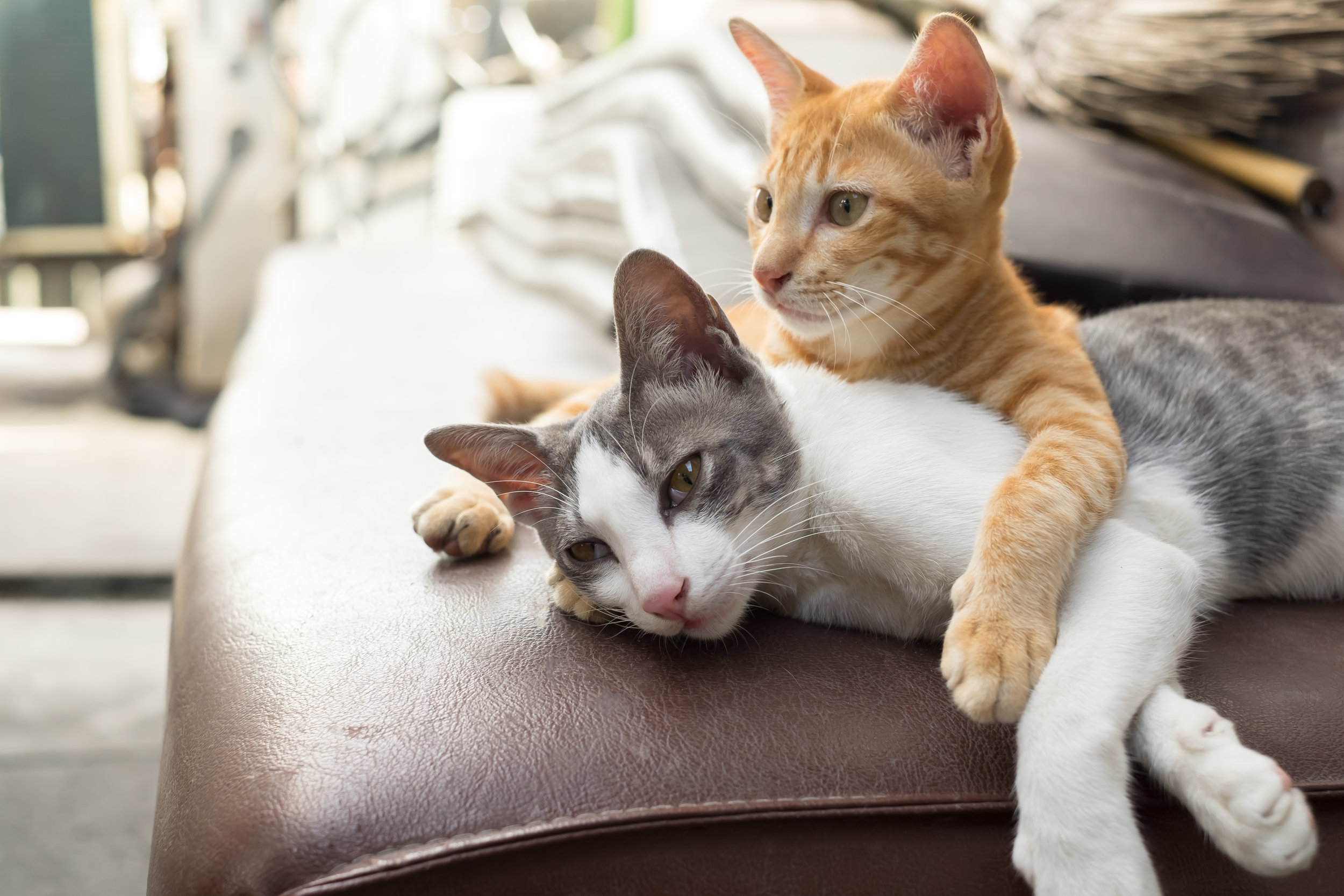 Cats-486495402_4896x3264.jpeg