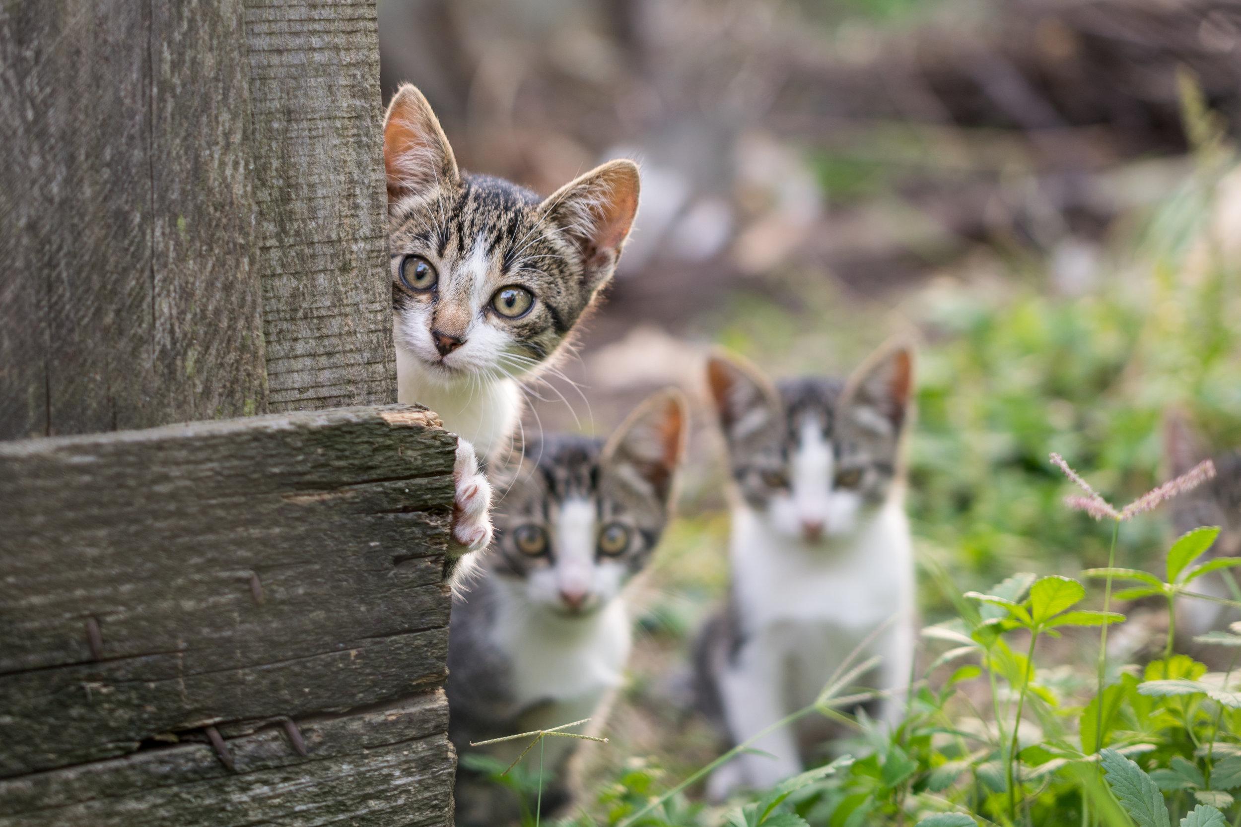 Curious-but-shy-kittens-491746652_4681x3121.jpeg