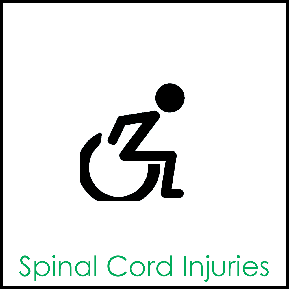 Spinal cord1x1.png