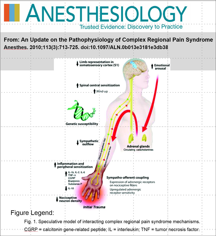 Bruehl Pathophysiology Figure 1.PNG