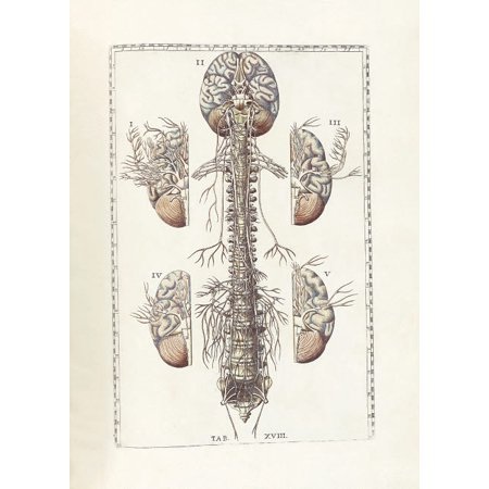 The science of human anatomy by Bartholomeo Eustachi Poster Print by National Library of MedicineStocktrek Images