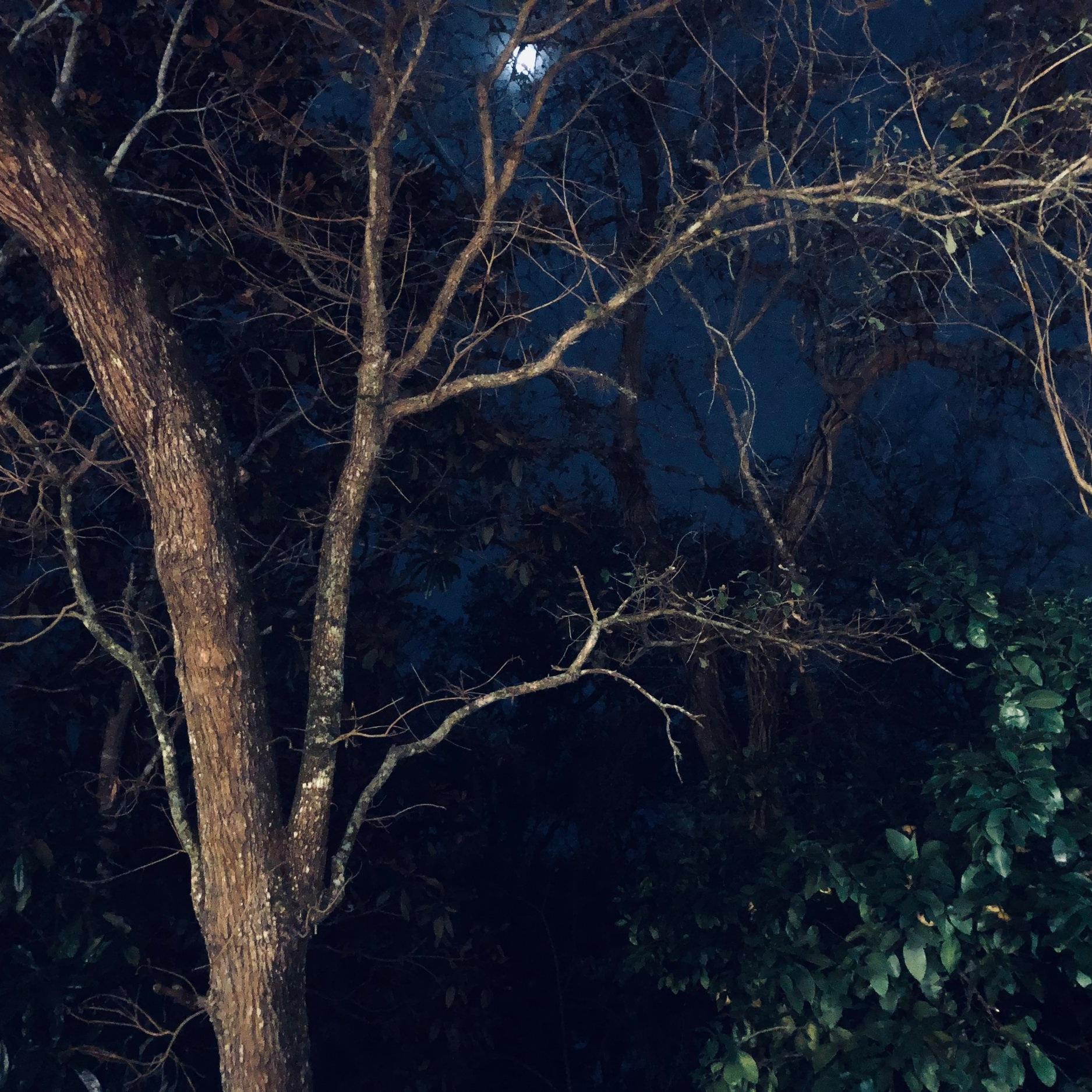 Owl+Trees.jpg