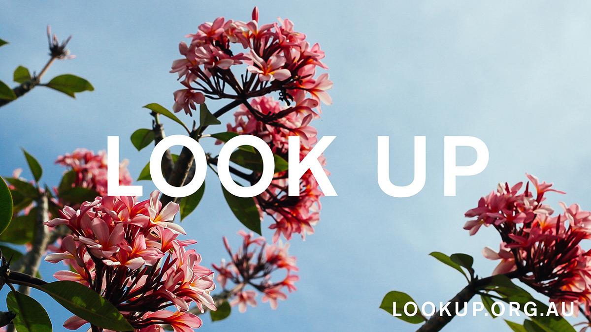 LOOK UP_6of8.jpg