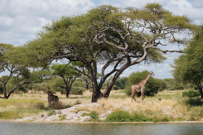Tarangire Nationalpark
