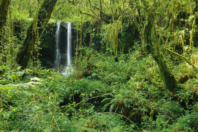 Wasserfall im Regenwald