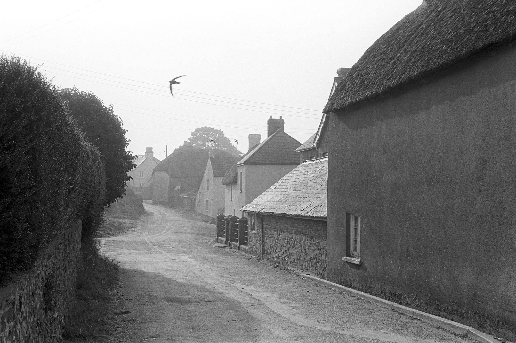 Village street with swifts, Roborough, 1981