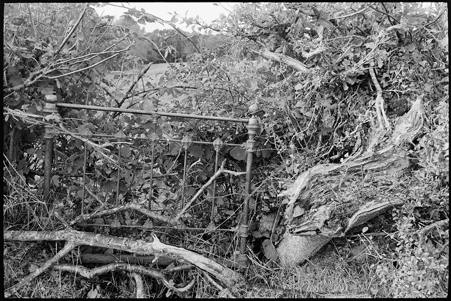 Natural Landscape, Hedge mended with old bedstead, Dolton, Woolridge, February, 1980.