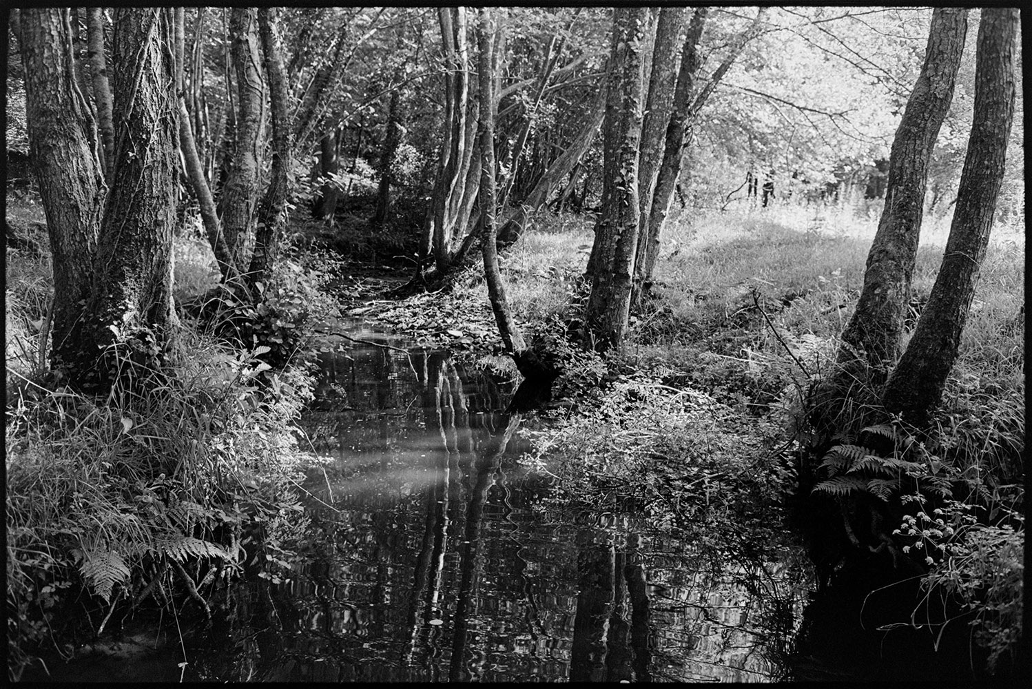 Stream with trees, overhanging vegetation, reflections, Dolton, Buds Mill, May 1982. Documentary photograph by James Ravilious for the Beaford Archive © Beaford Arts