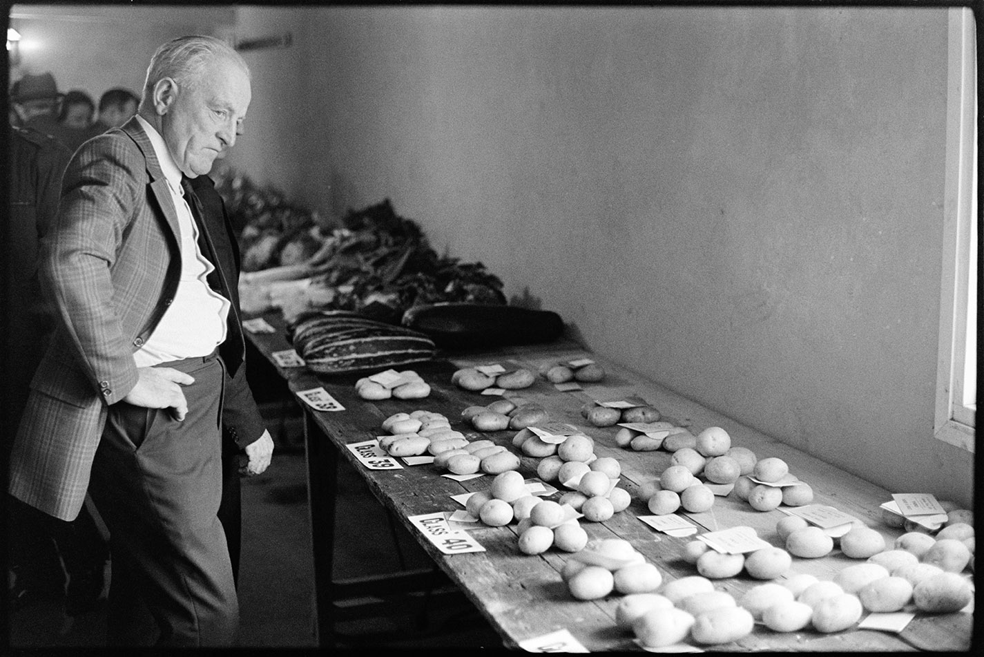 Man looking at potatoes, flower show, St Giles in the Wood, 26 October 1974. Documentary photograph by James Ravilious for the Beaford Archive © Beaford Arts