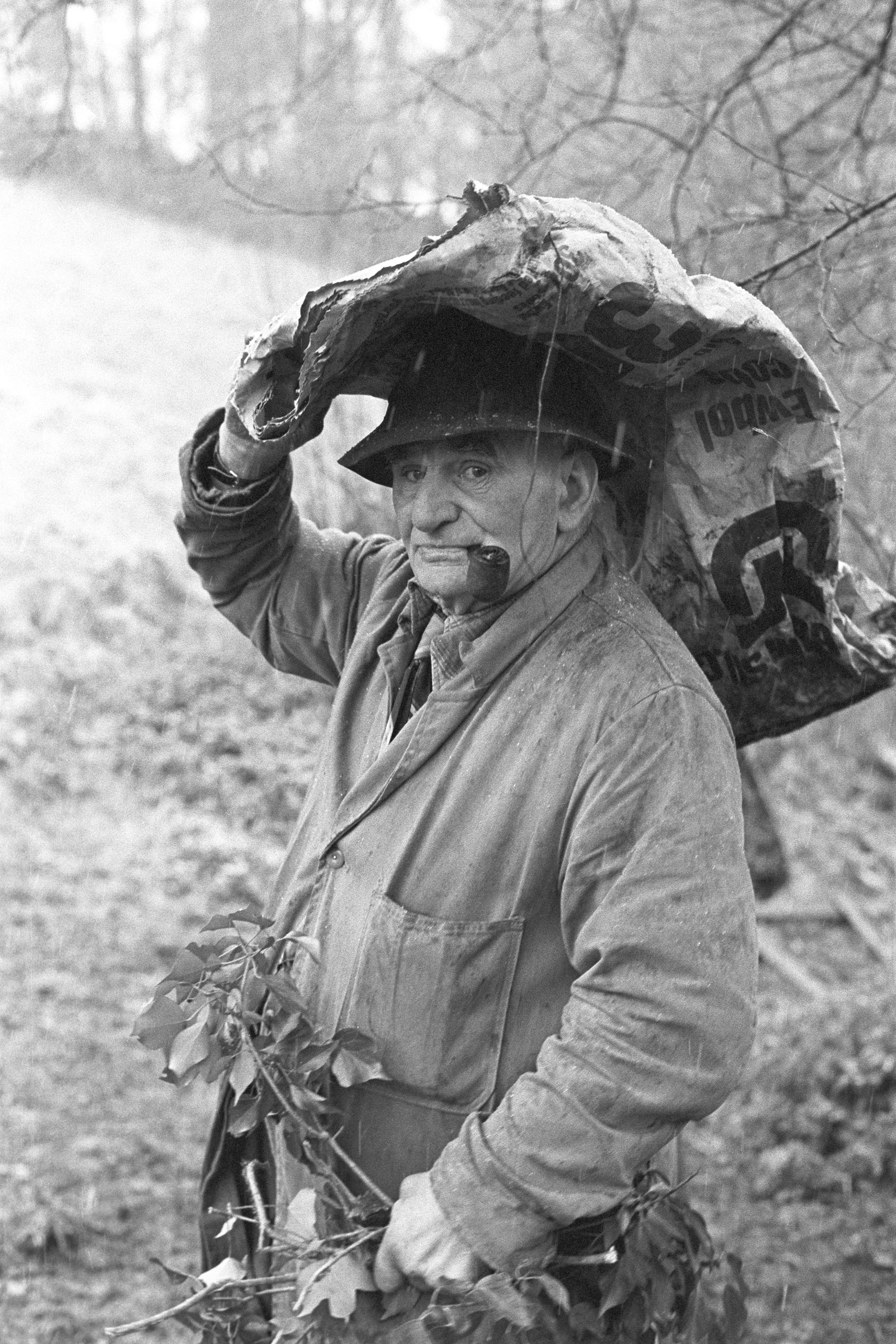 Archie Parkhouse with ivy for sheep, Millhams, Dolton, April 1975