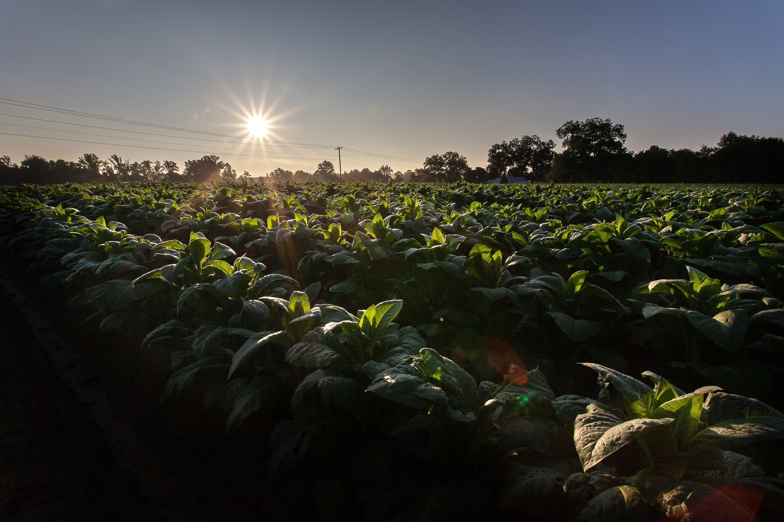 agriculture-close-up-clouds-2257524.jpg