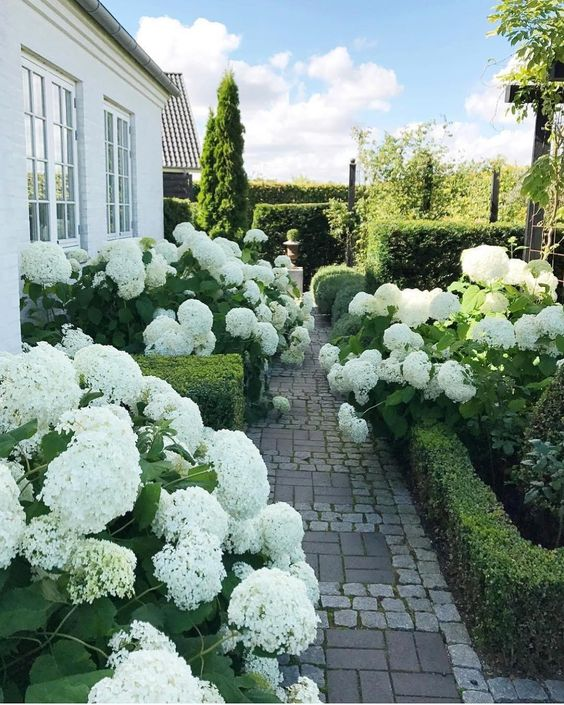 Landscaping Inspiration