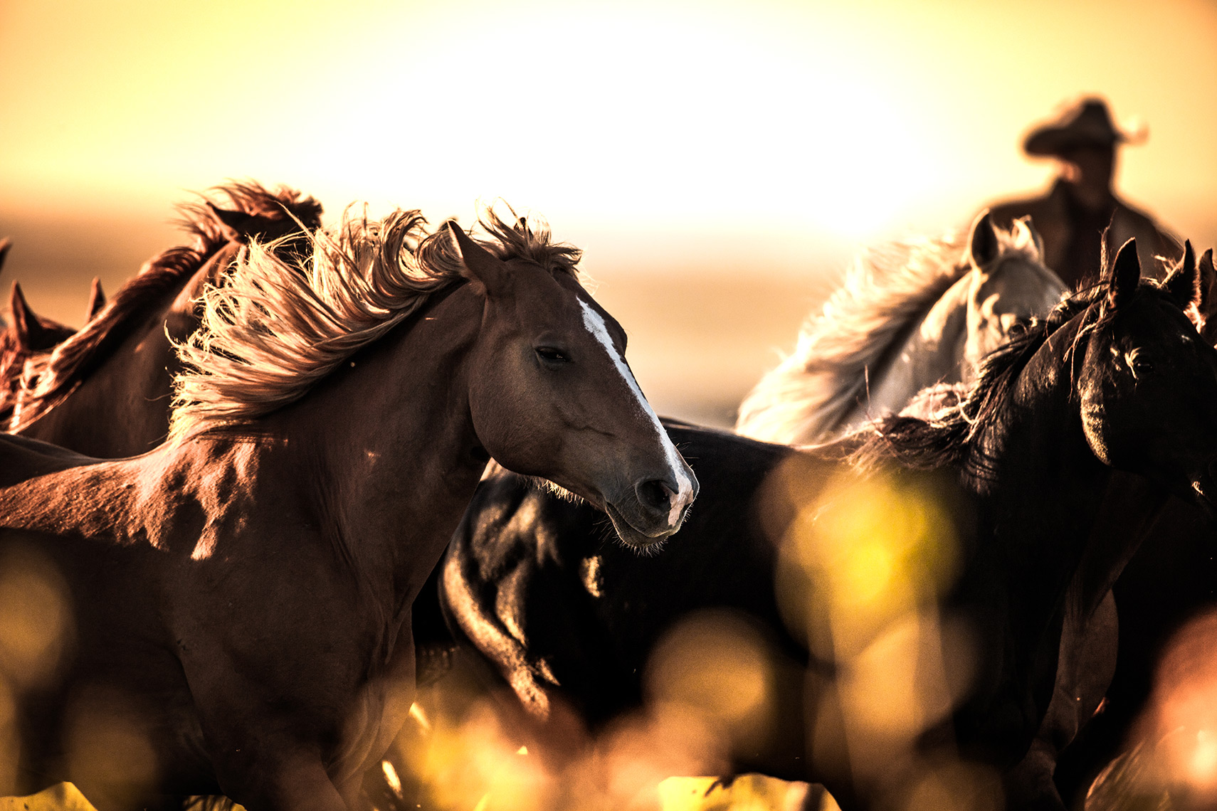 American Midwest Photography: Horse riding in the sunset.