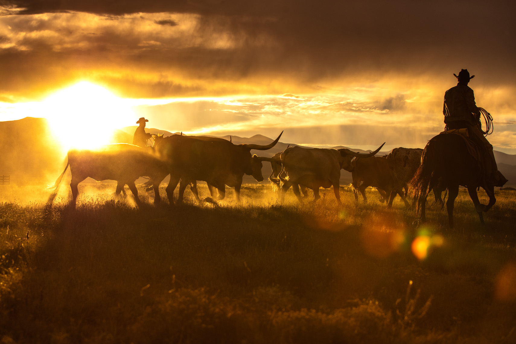 American West Photography: Horseback riders herding cattle.
