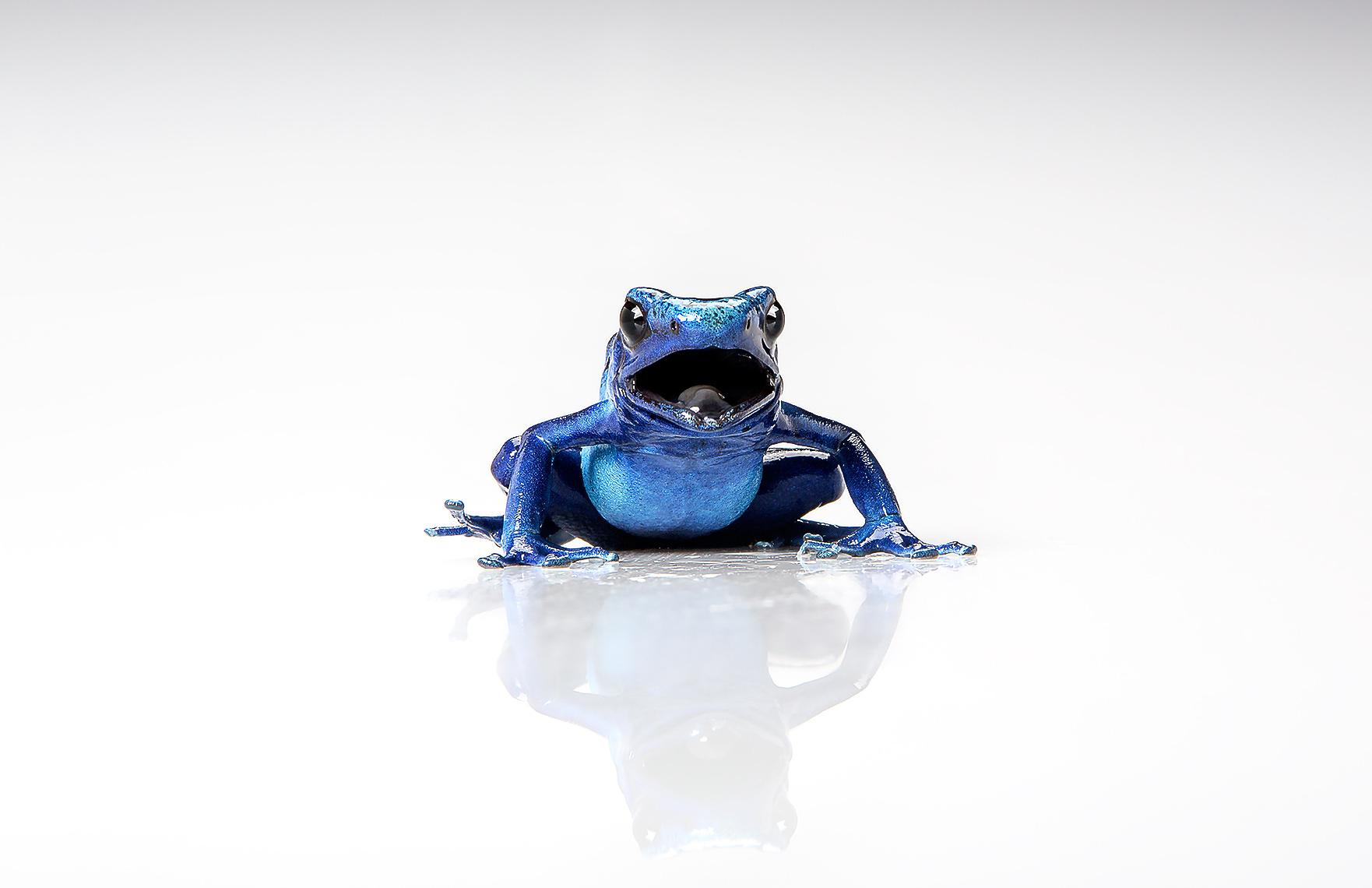 BlueDartFrog-0419_r1_17x11websharp.jpg