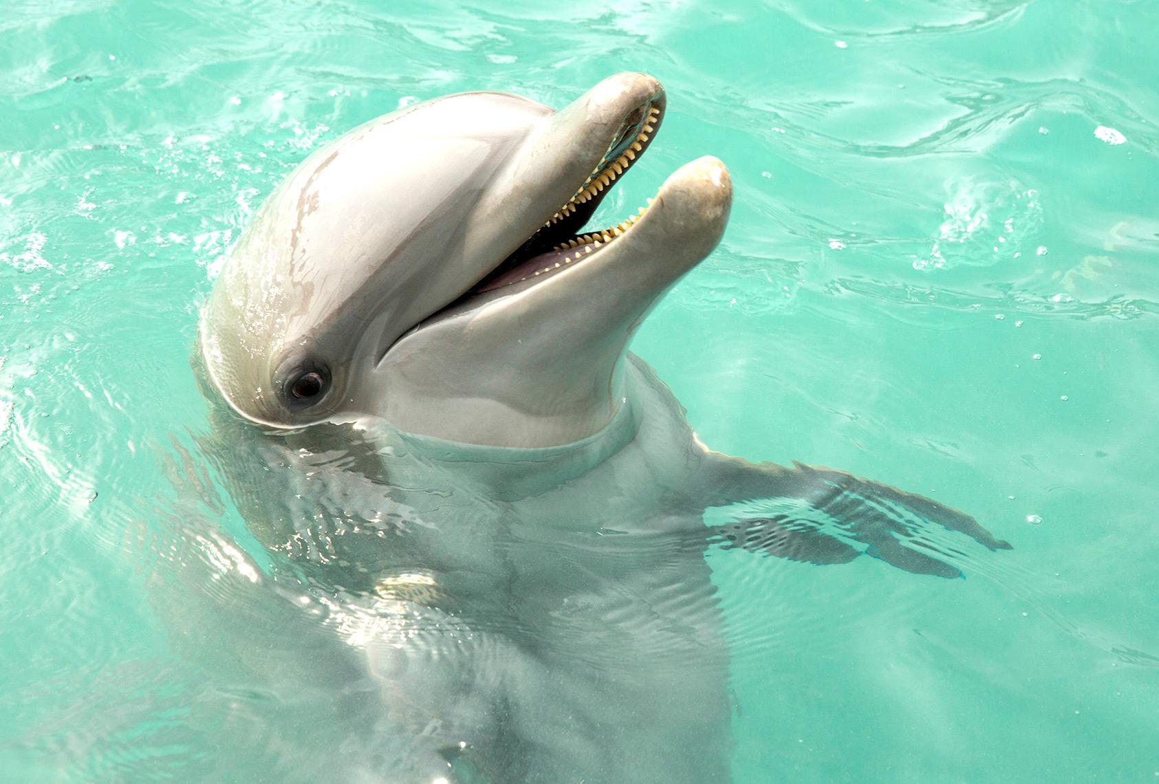 Dolphins_VisitFL_1258-1.jpg