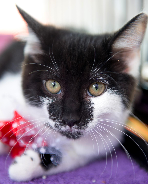 Another kitten photo of Hidee.