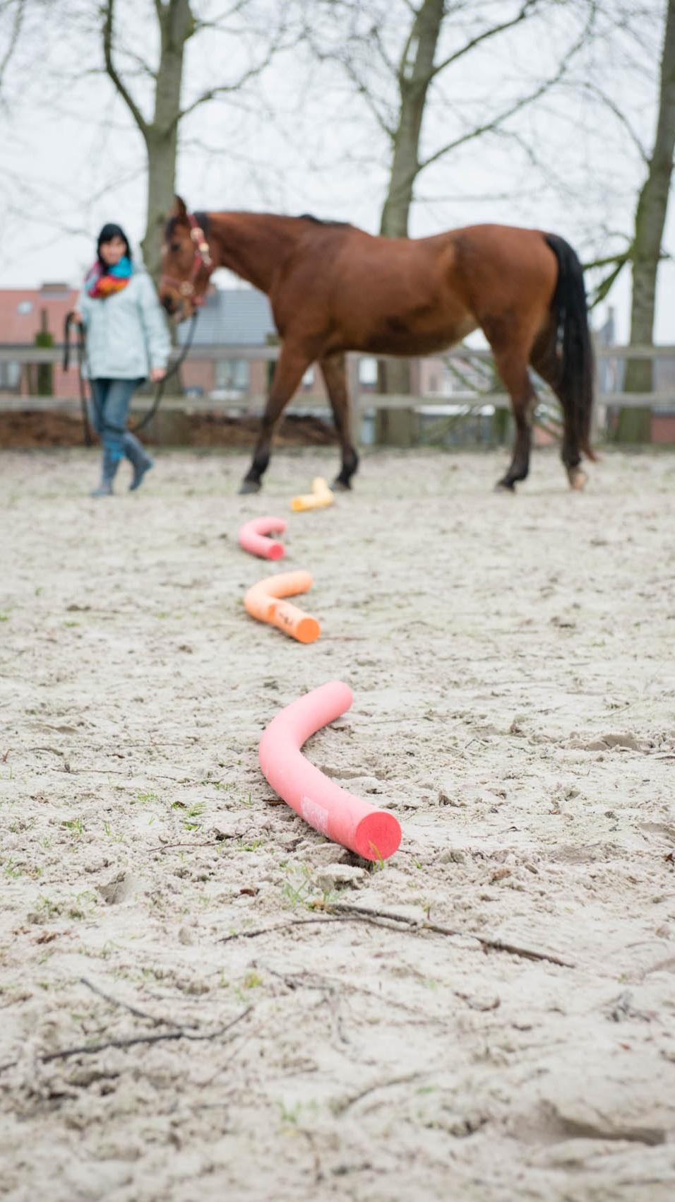 paardencoaching taster.jpg