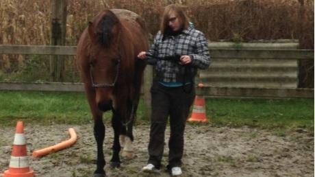 Paardencoaching 5.jpg