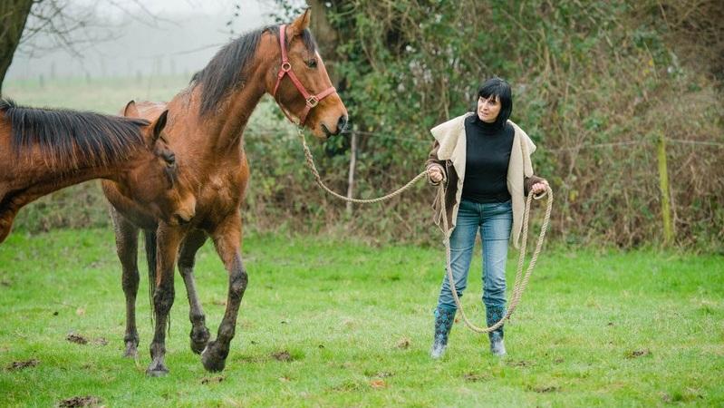 Paardencoaching 1.jpg