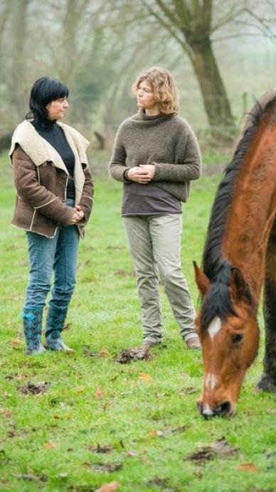Paardentherapie.jpg