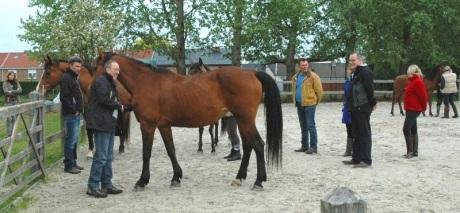 Teambuilding met paarden.jpg