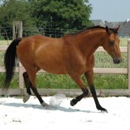 Paardencoach+Phebus.jpg