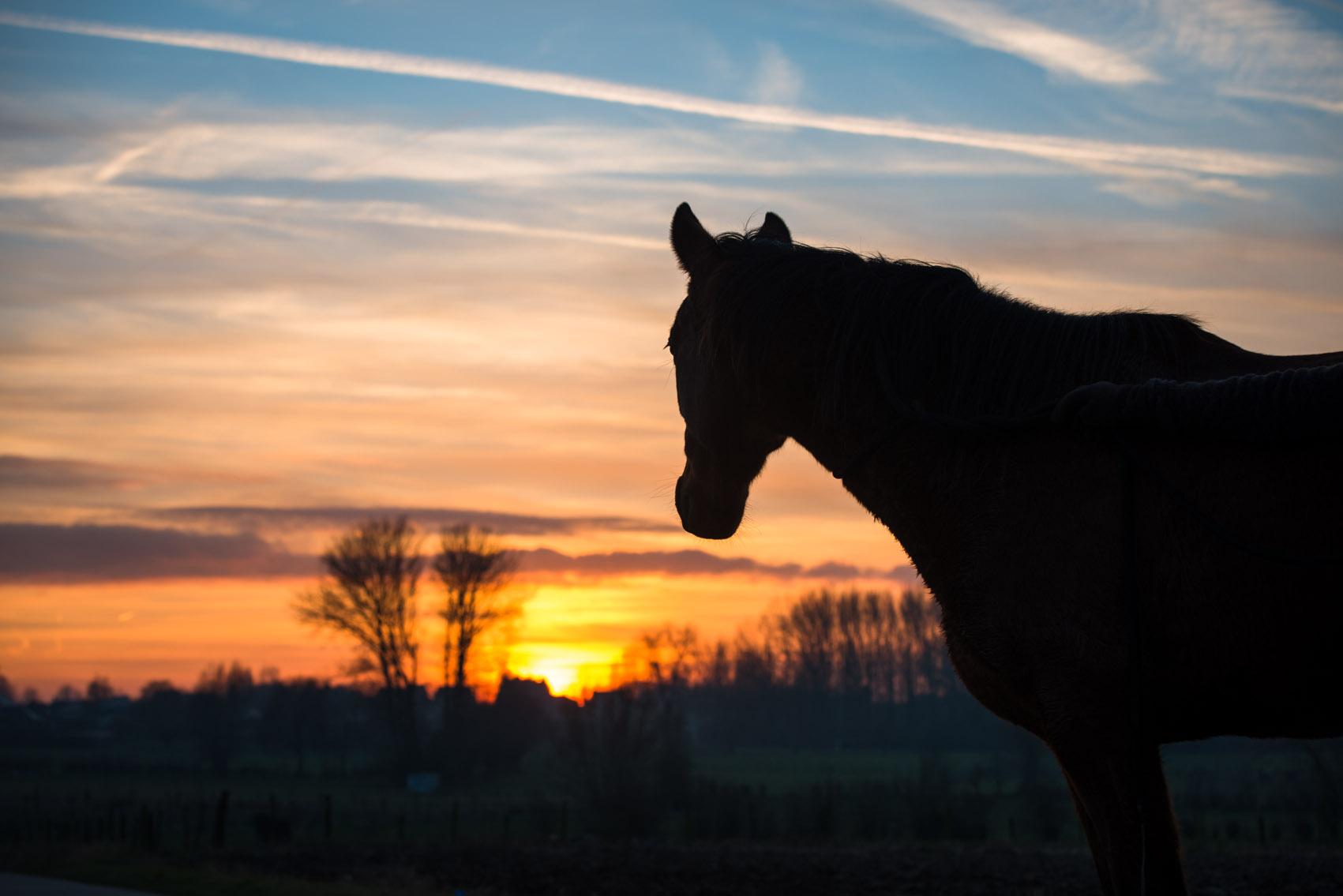 Paardencoaching en astrolgie jpg