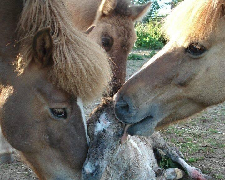 paardencoaching_1339.jpg