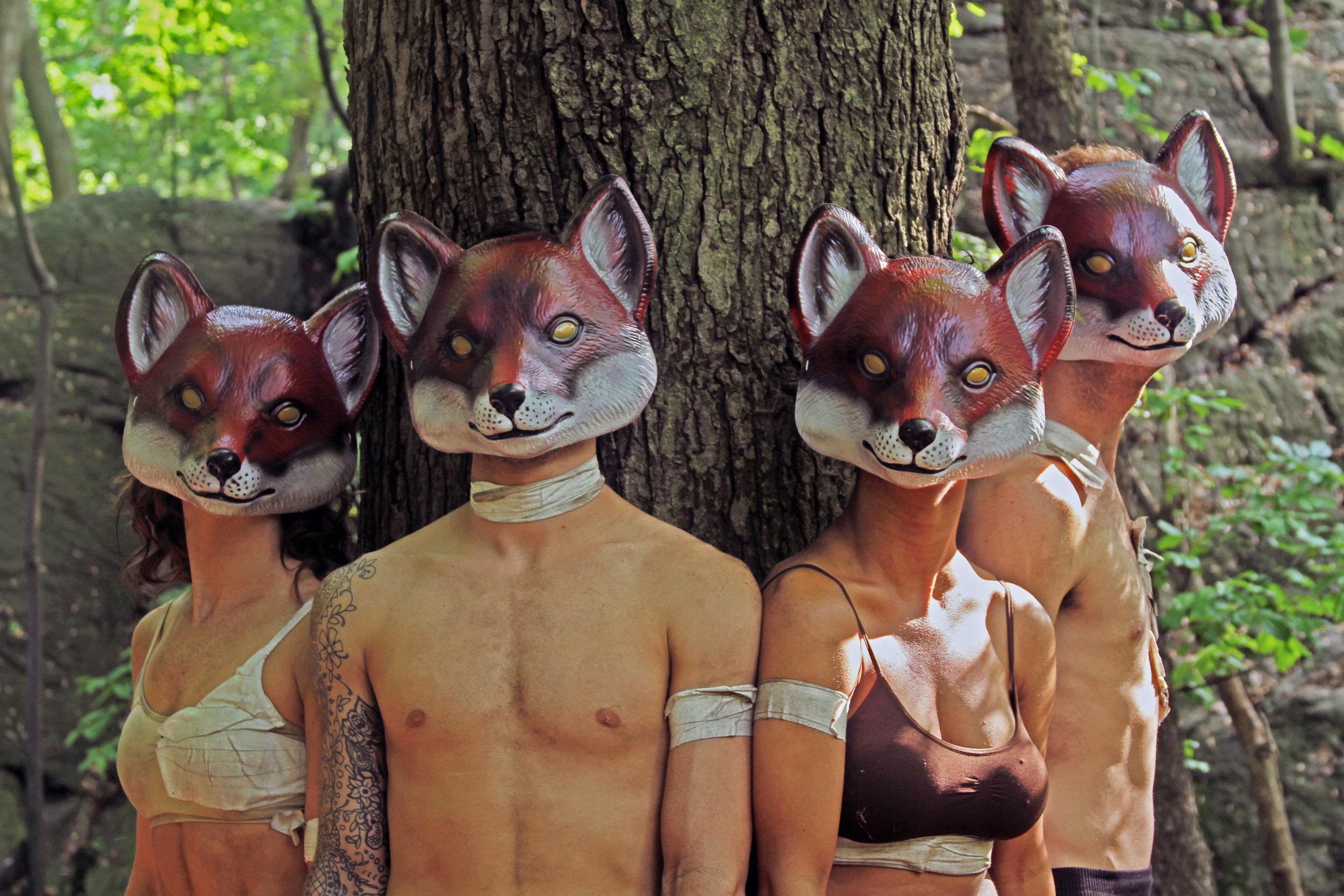 Foxes_img1.jpg