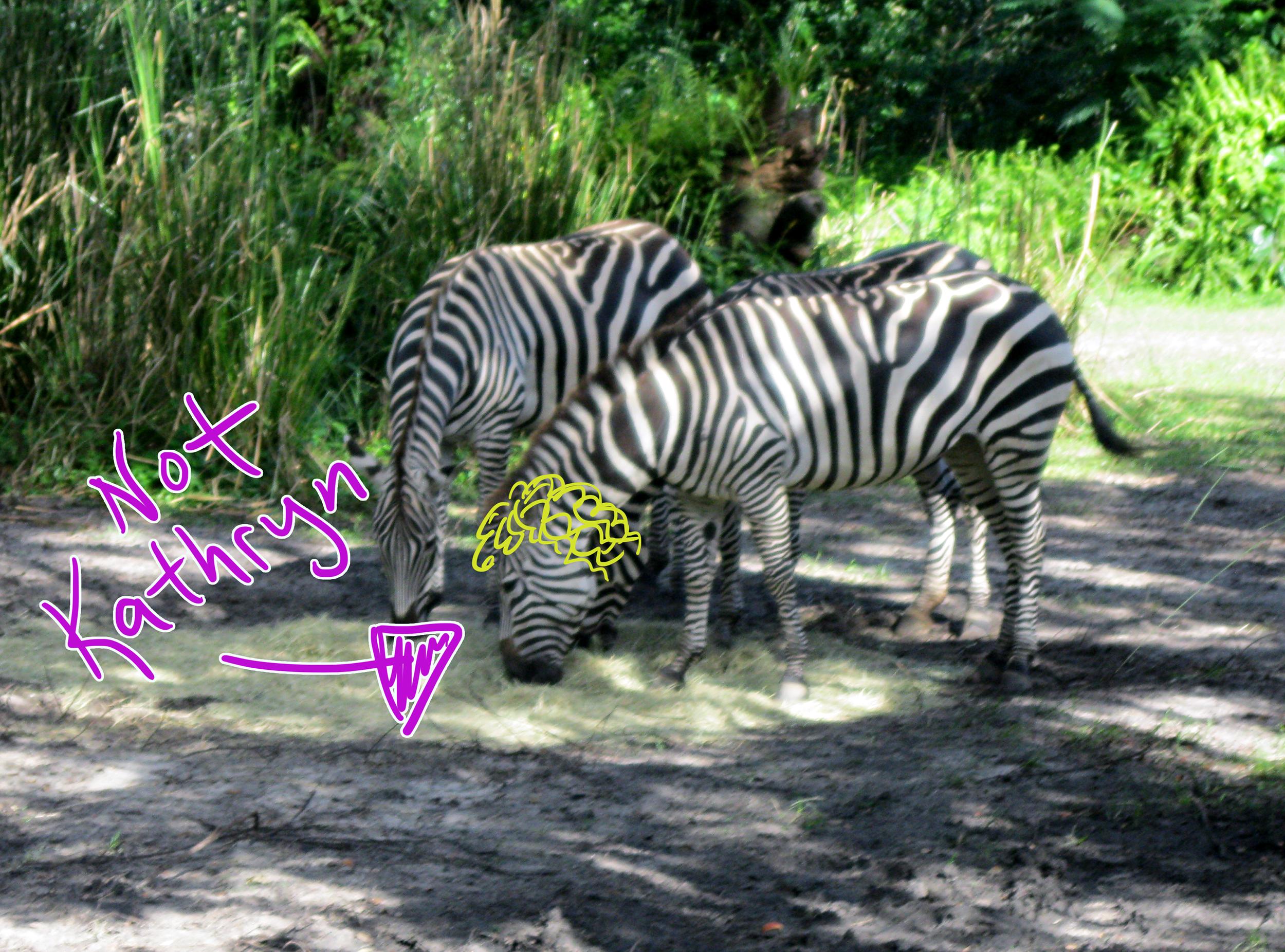 Zebra Kathryn Smaller.png