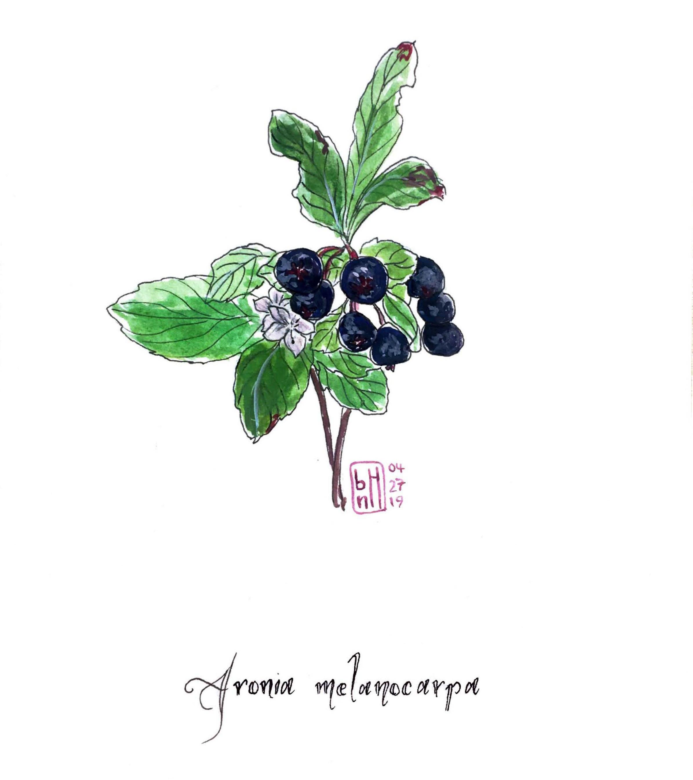 Illustration: Briyanna Hymms