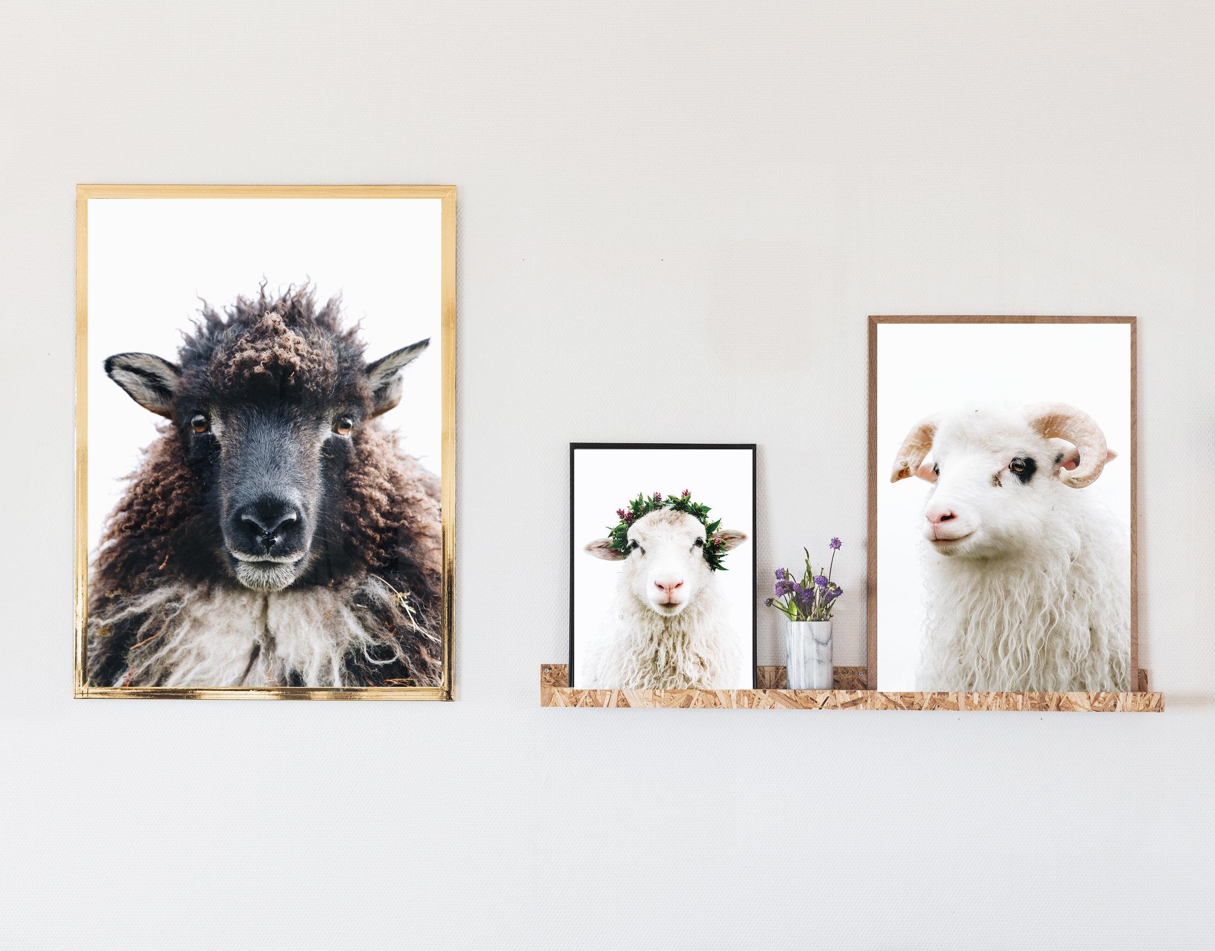 sheepposter
