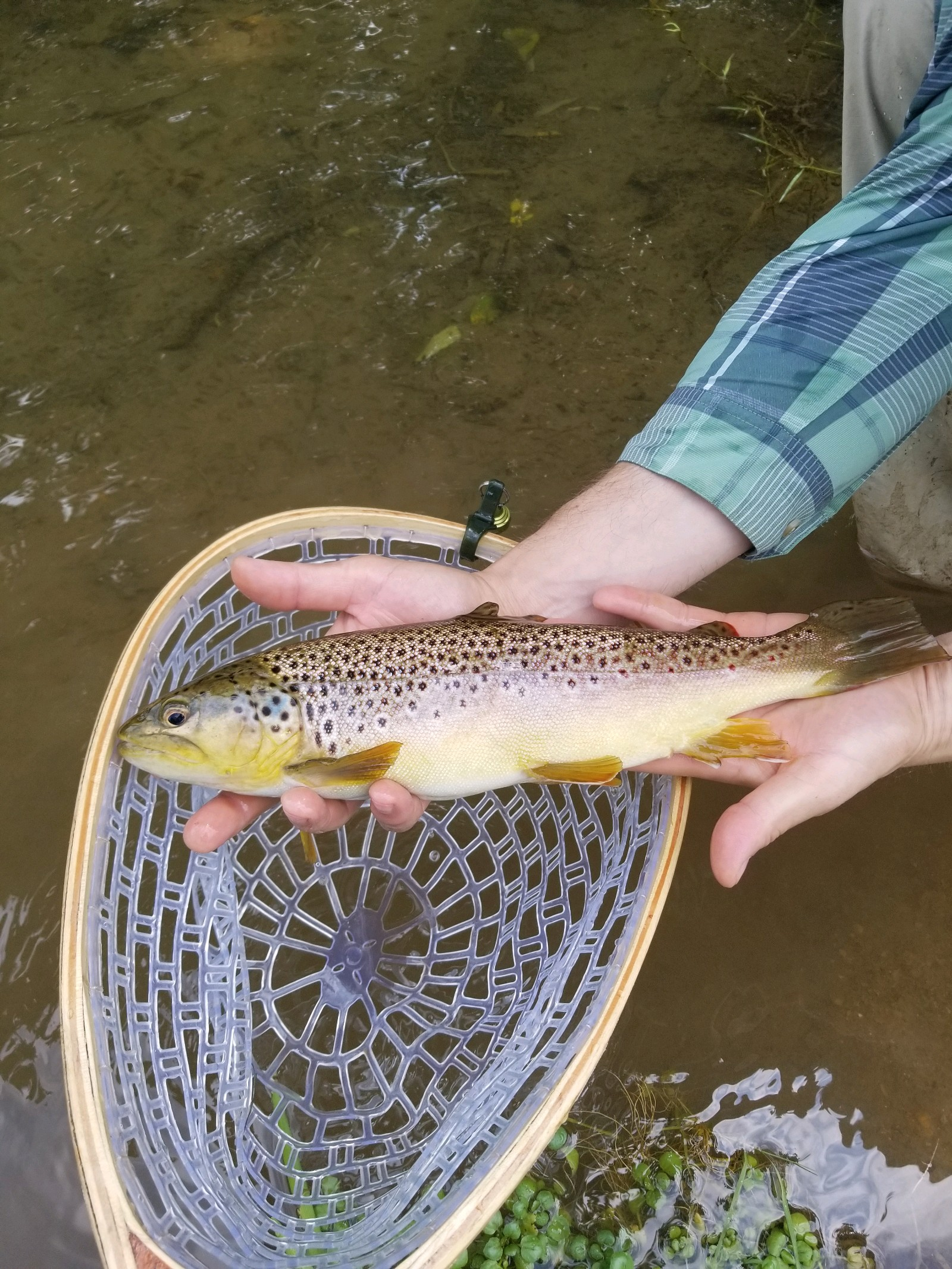 Brian landed a wild Mossy Creek Brownie