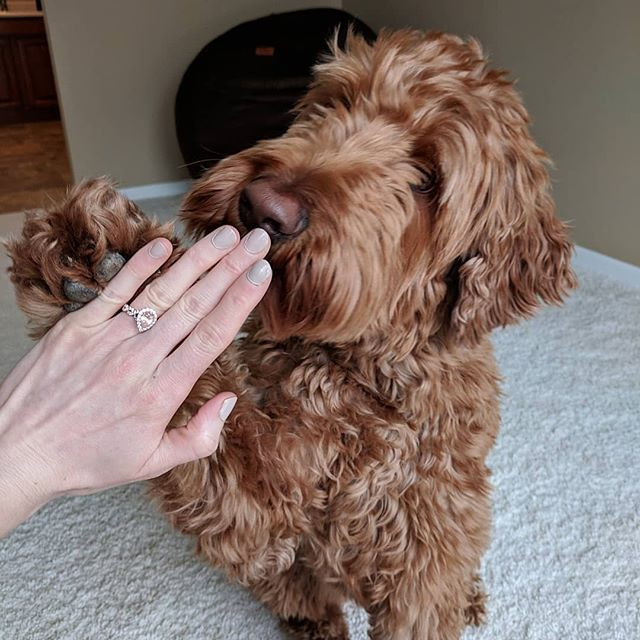 Today is for celebrating all of our wonderful, loving, hardworking moms out there, and yes that includes you doggy moms!  Cheers for giving the world just a little more sparkle! #HappyMothersDay #NeilLaneJewelry @kayjewelers (📸 @gemmadoodle)