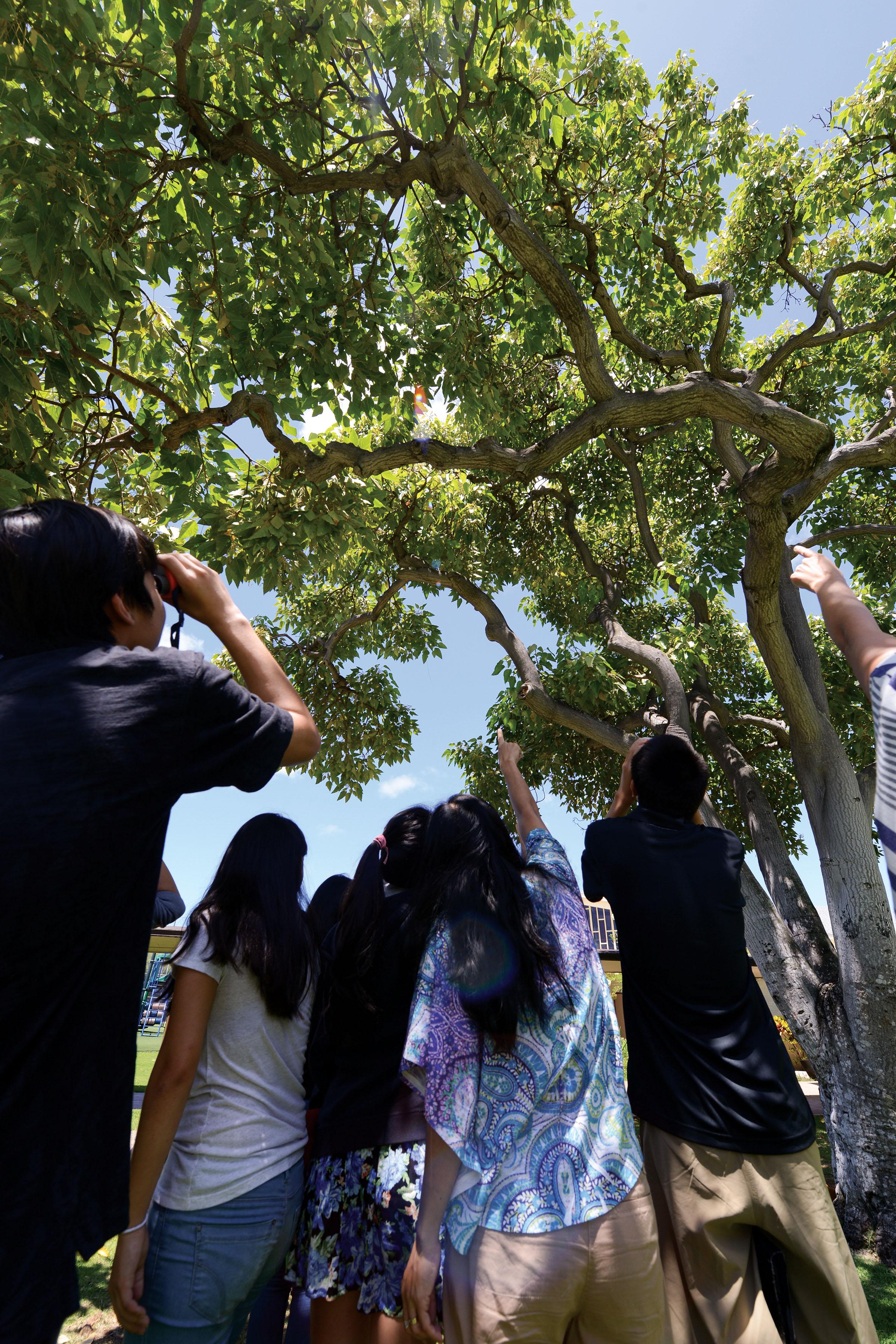 Photo by Rich Downs, Manu o Ku Hui Coordinator and Audubon Society Board Member.