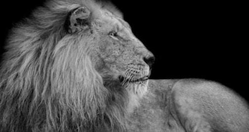 Lion image for blog.jpg
