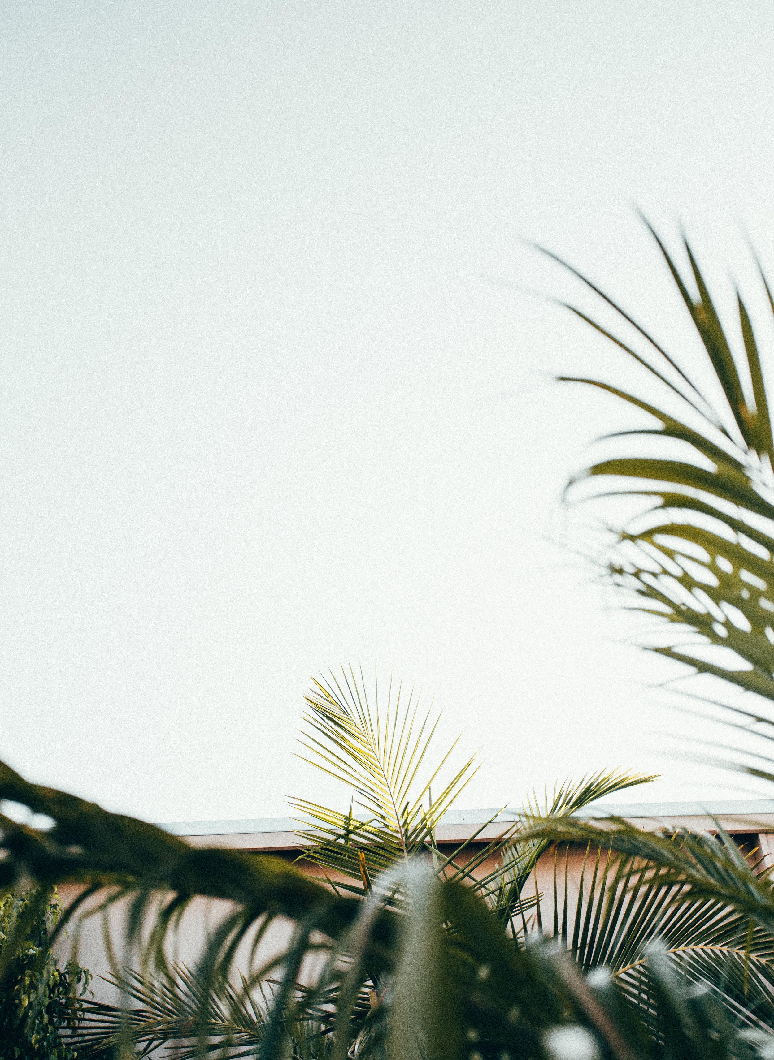 Vista Outside 7.jpg