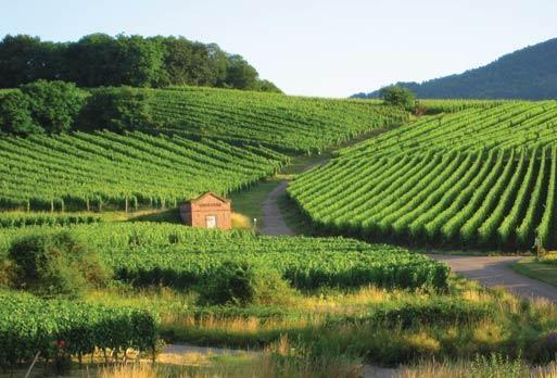 wine region.jpg