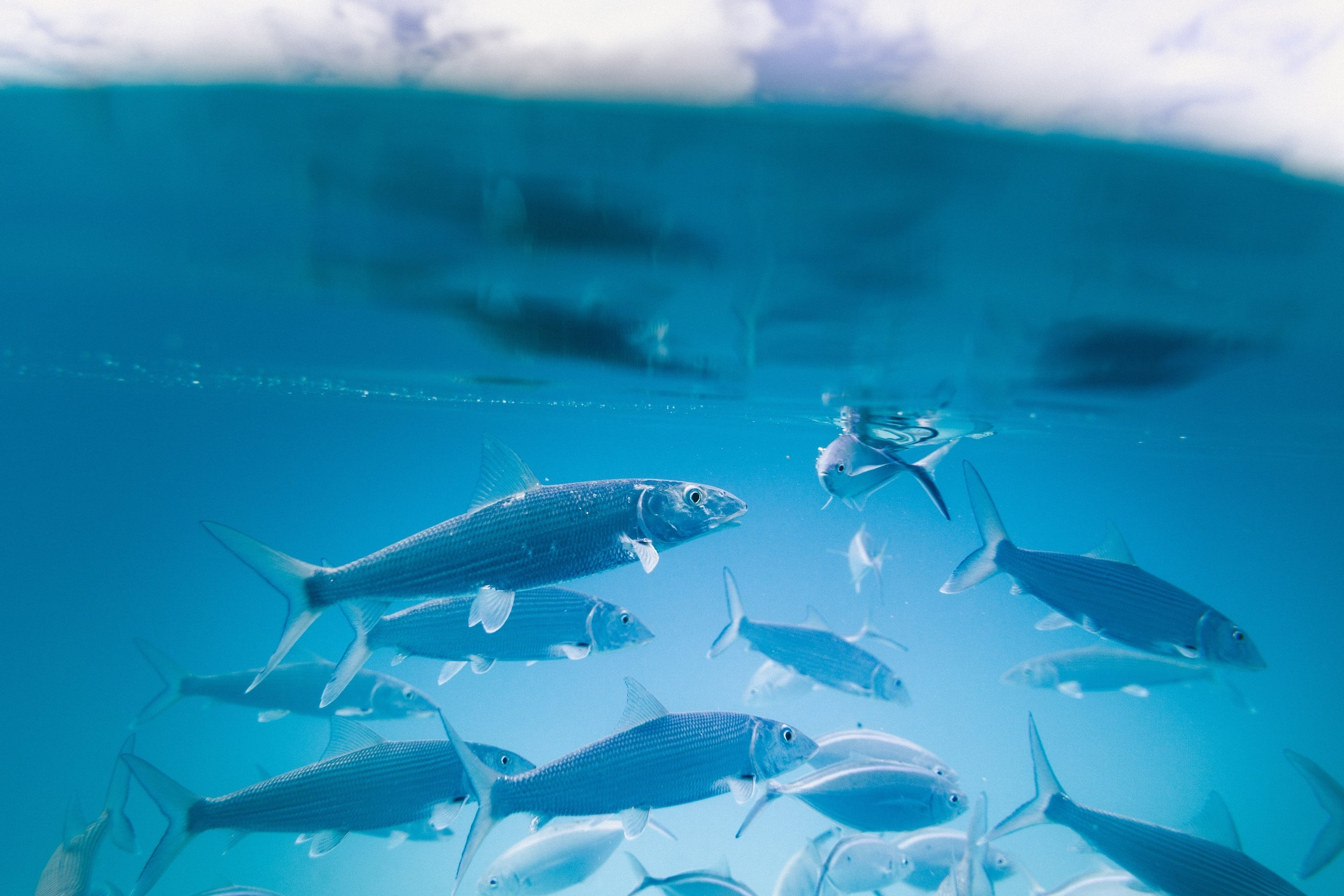 Live bait -