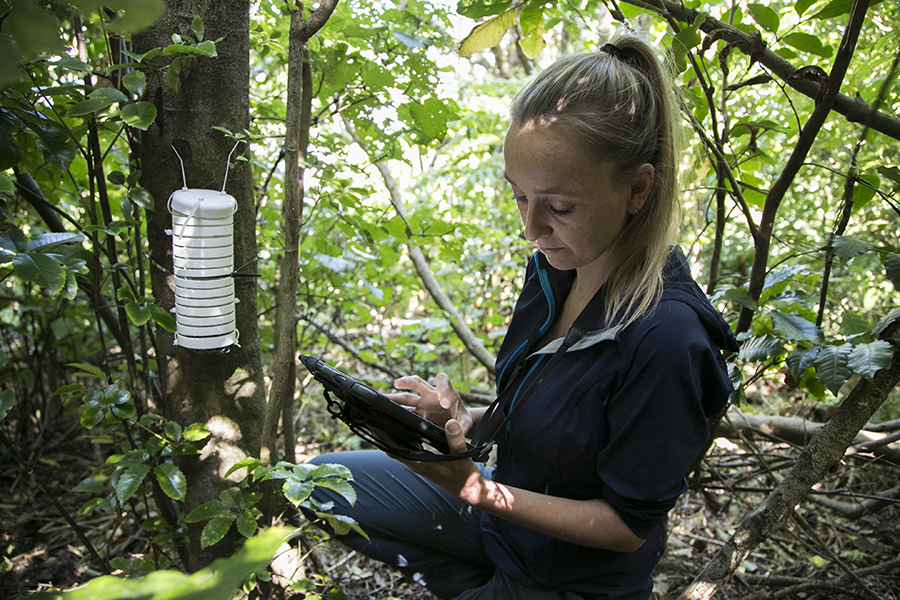 Katherine collecting data at the first Manawa Karioi plot.