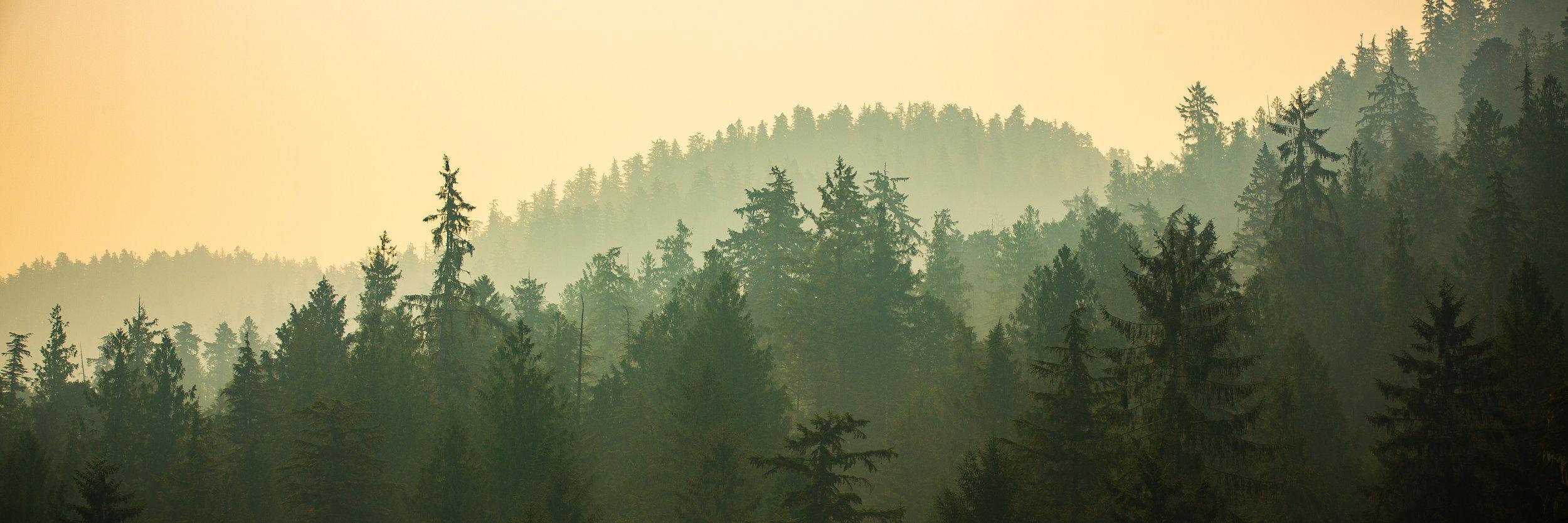 Image-72-landscape-smokeytrees-1.jpg