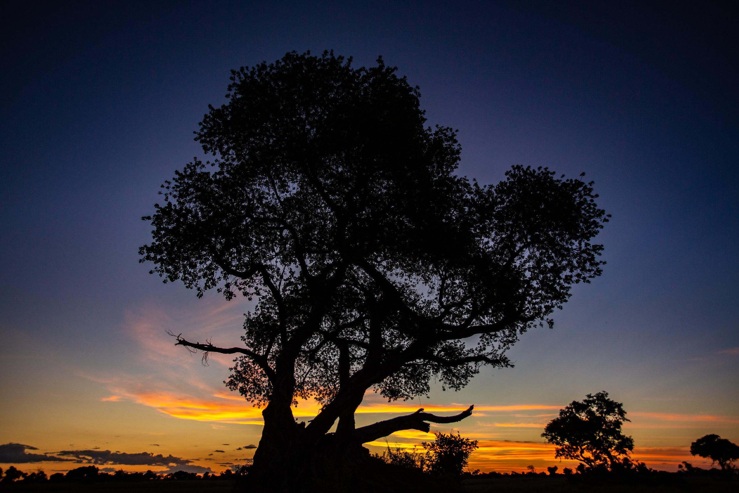 'African Sunset' Botswana