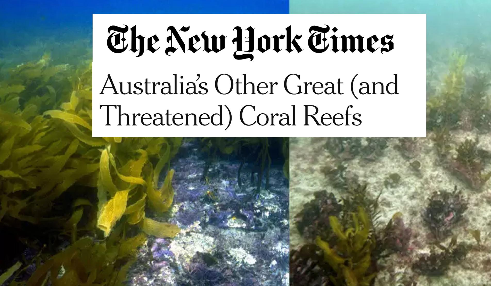 GSR 11 New York Times.jpg