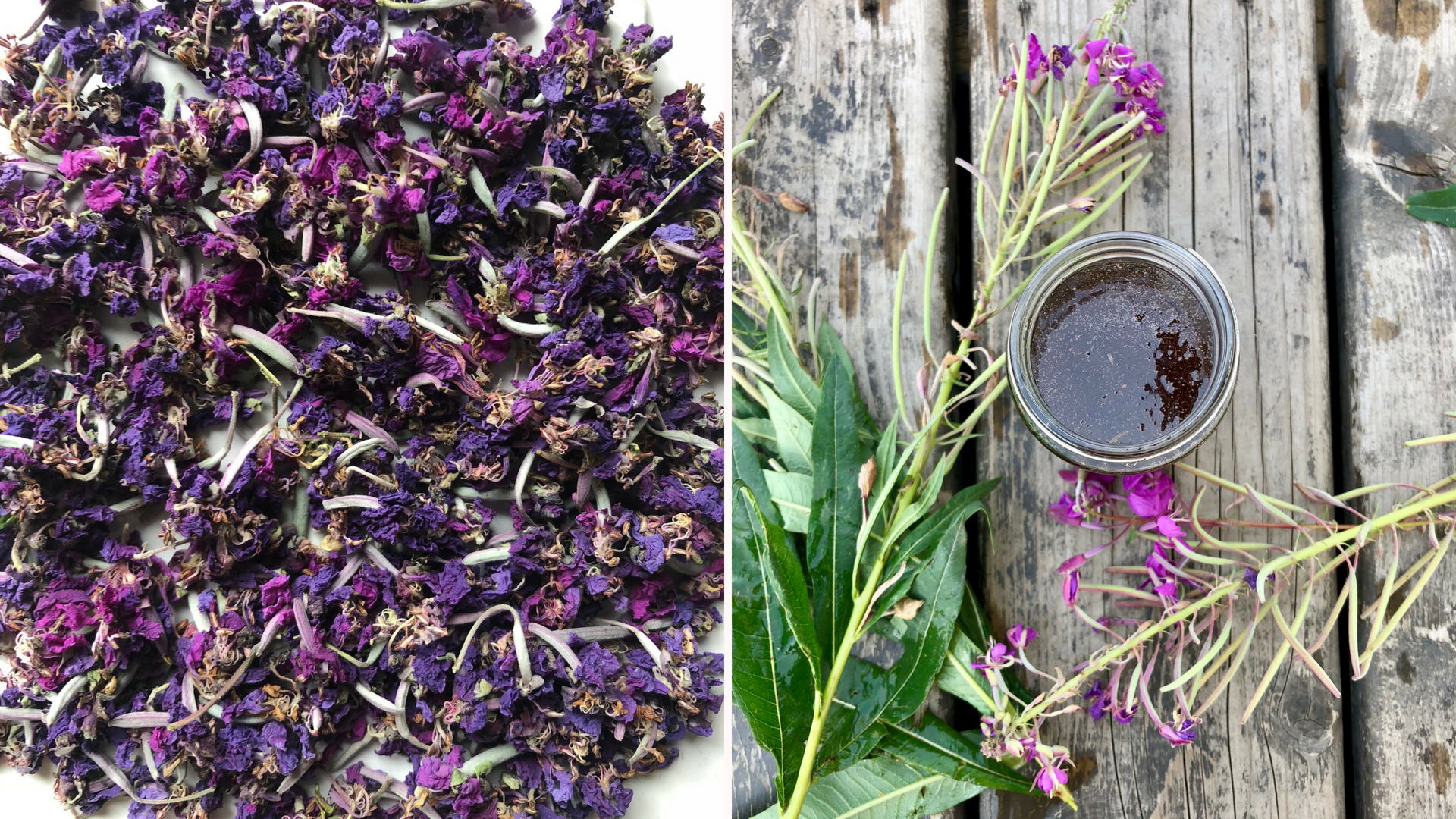 Dried fireweed flowers and homemade fireweed syrup.