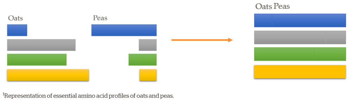 Figure 1. Complementary proteins (1) from oats and peas when combined provide all essential amino acids.  Source.
