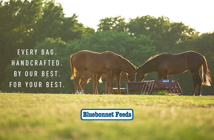 Bluebonnet Feeds - We feed exclusively Bluebonnet Feeds Intensify. We believe it's the best feed on the market and can't be happier with the results we see in all our horses. From performance horses of all ages, both competing and in training, as well the mares, colts, and fillies in our breeding program, we rely on the researched, tested, and locked formulas of Bluebonnet Feeds to meet all the specific nutritional requirements our horses need to be the best they can be.If you're interested in learning more about this amazing feed or trying it for yourself, head over to BluebonnetFeeds.com for more information!