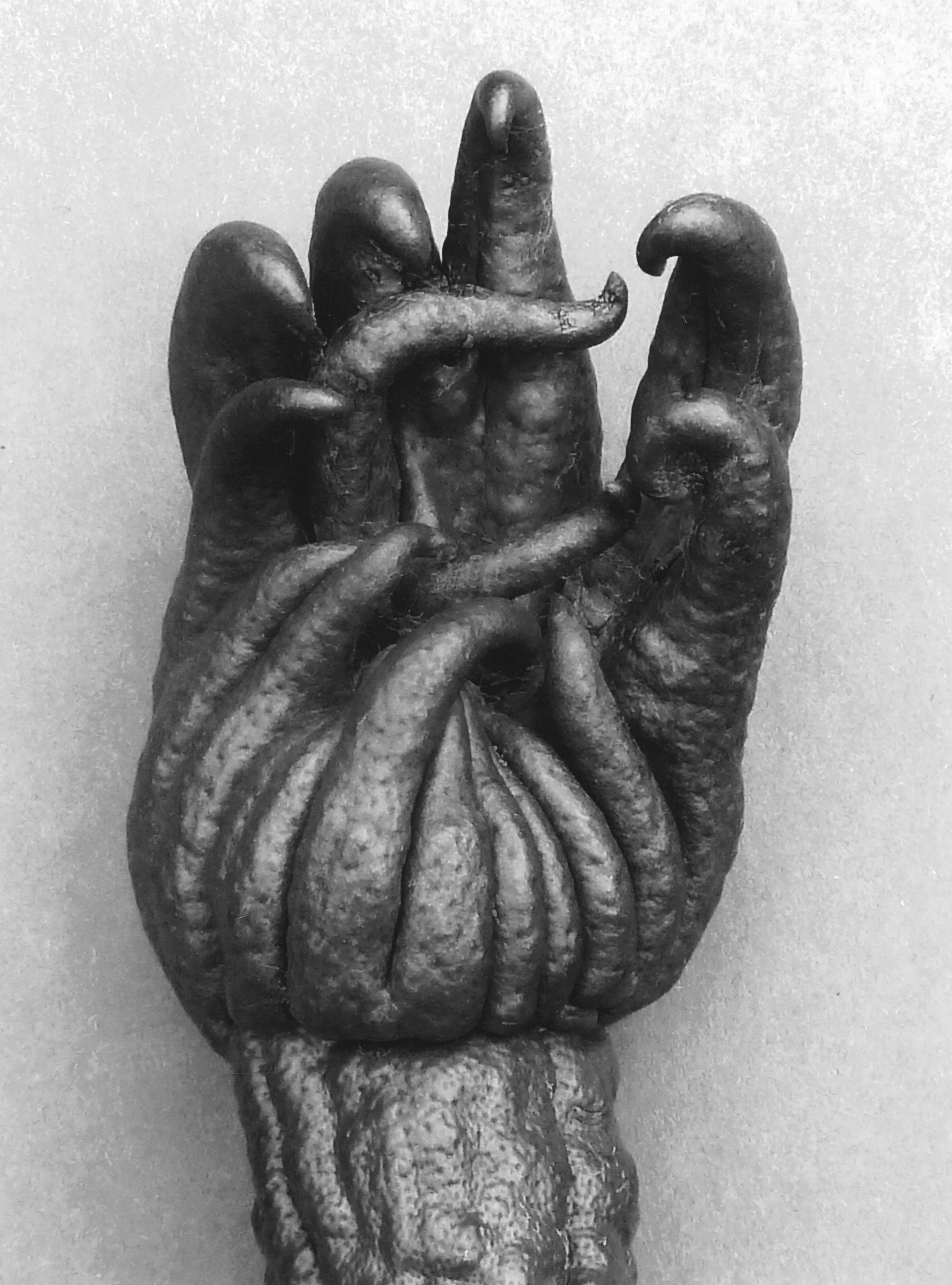 Peter Peryer , Buddha's Hand , 2012. Digital print. Image courtesy of the artist.