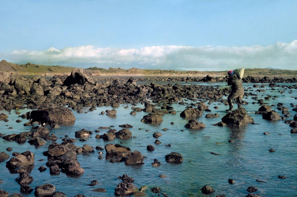 Fiona Clark, Ken Matuku Collecting on Kūnene, Waiongona, 26/06/1980. Collection of The Dowse Art Museum.